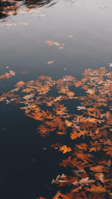 Autumn Phone Wallpaper 049 768x1365