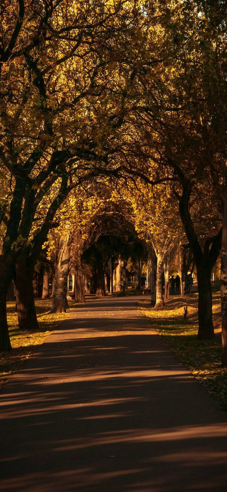 Autumn Phone Wallpaper 051 768x1664