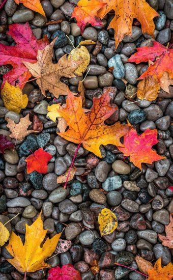 Autumn Phone Wallpaper 054 340x550