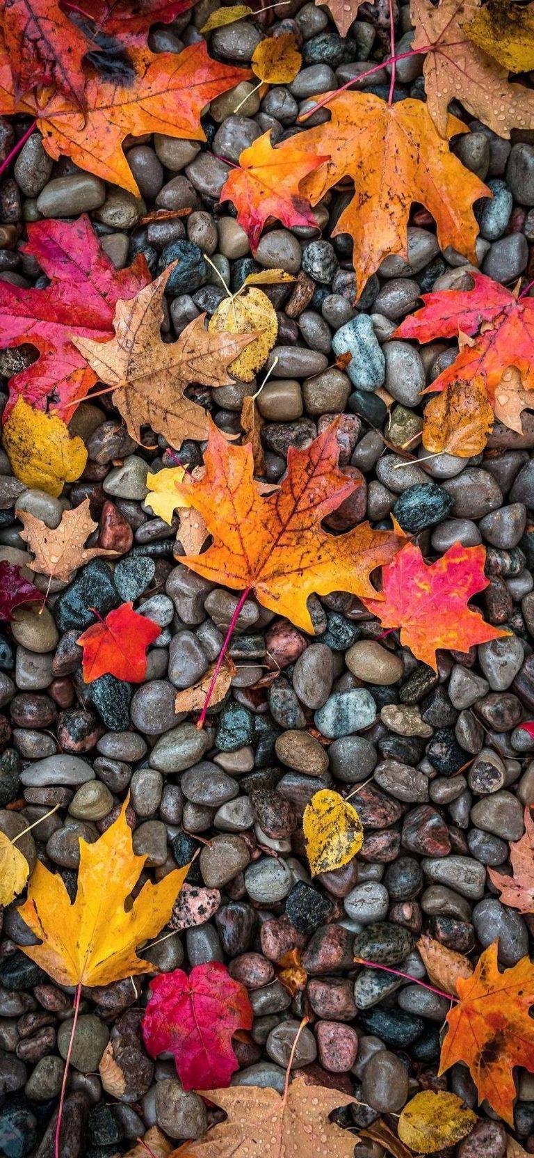 Autumn Phone Wallpaper 054 768x1664