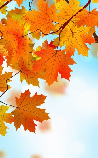 Autumn Phone Wallpaper 060 340x550