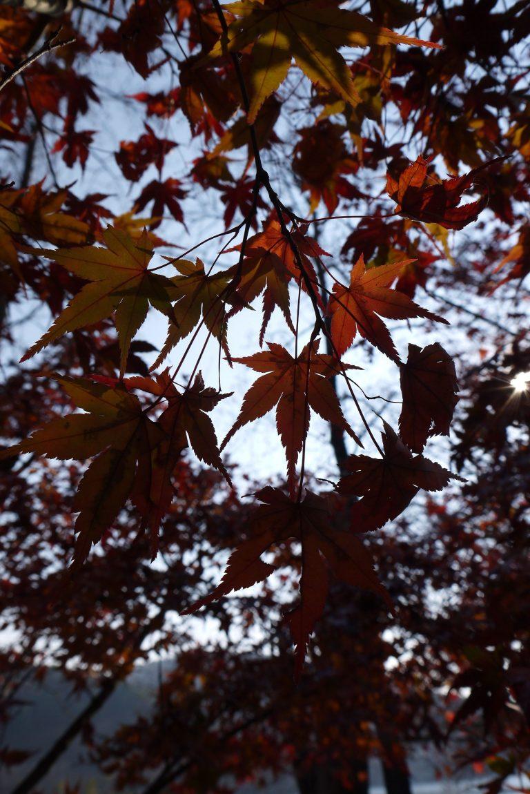 Autumn Phone Wallpaper 064 768x1150