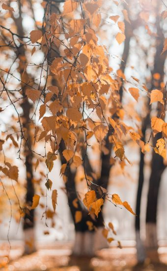 Autumn Phone Wallpaper 065 340x550