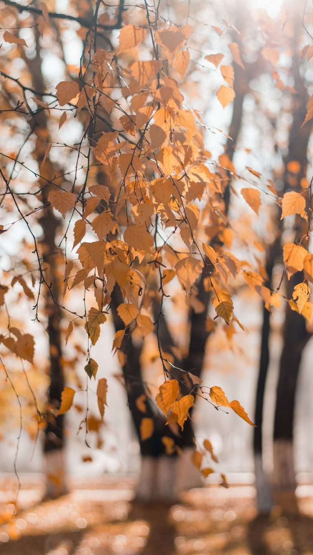 Autumn Phone Wallpaper 065 768x1365