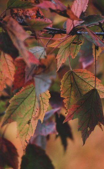 Autumn Phone Wallpaper 068 340x550