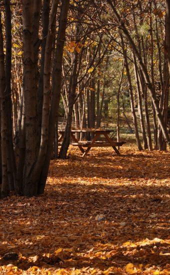 Autumn Phone Wallpaper 074 340x550