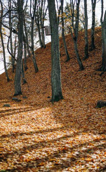 Autumn Phone Wallpaper 075 340x550