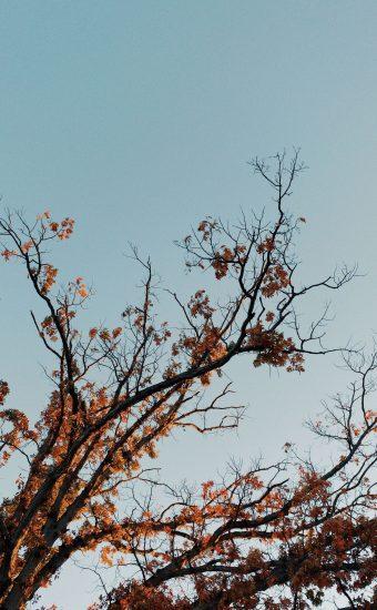 Autumn Phone Wallpaper 076 340x550