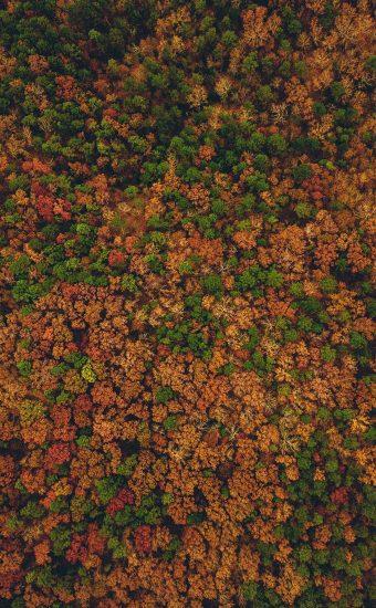 Autumn Phone Wallpaper 079 340x550