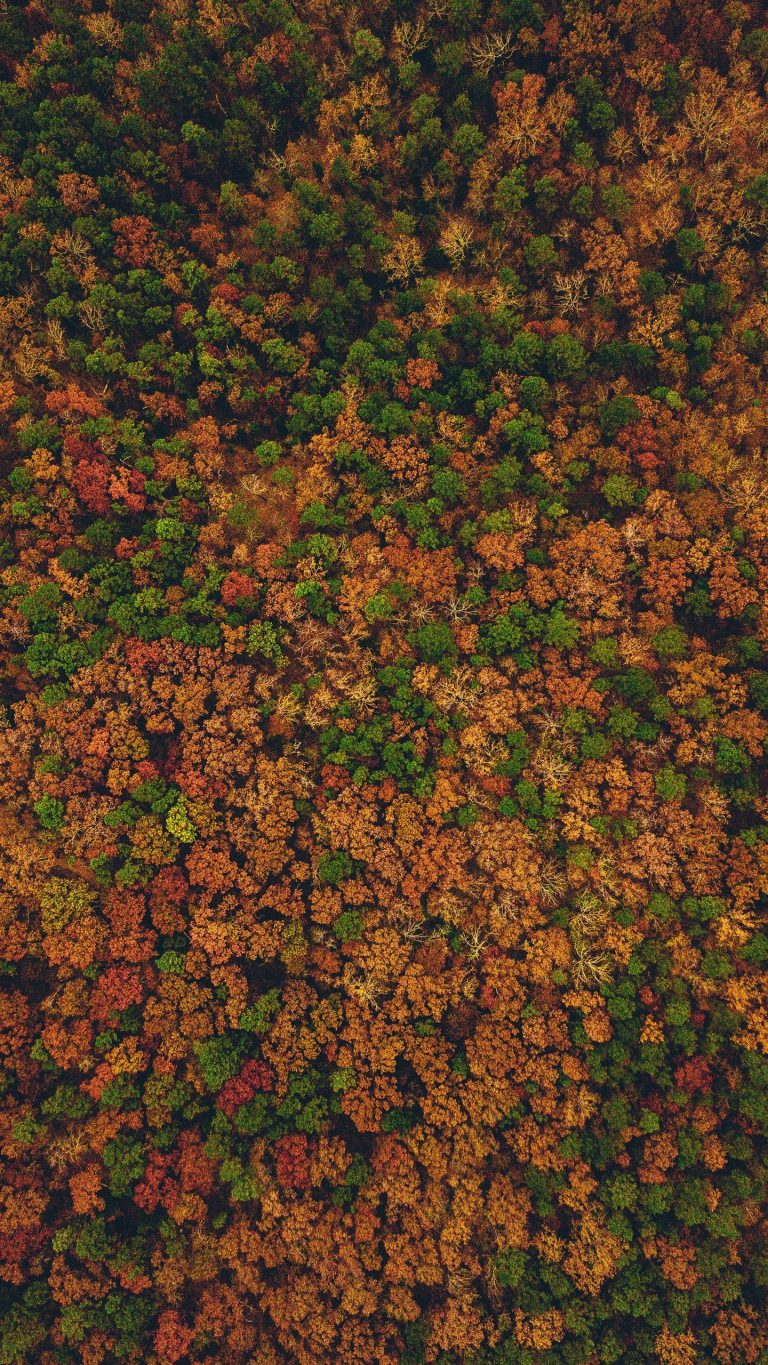 Autumn Phone Wallpaper 079 768x1365