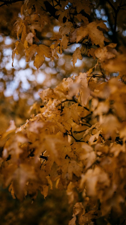 Autumn Phone Wallpaper 082 768x1365