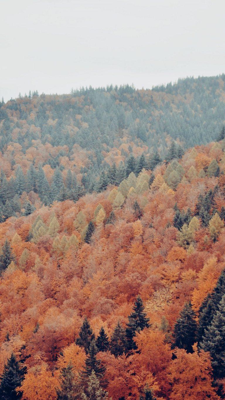 Autumn Phone Wallpaper 084 768x1365
