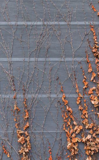 Autumn Phone Wallpaper 085 340x550