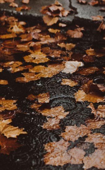 Autumn Phone Wallpaper 086 340x550