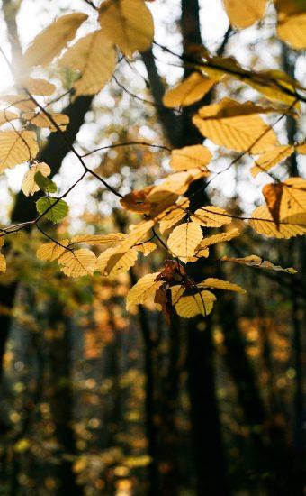 Autumn Phone Wallpaper 087 340x550