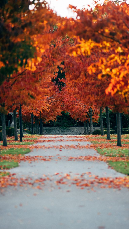 Autumn Phone Wallpaper 091 768x1365