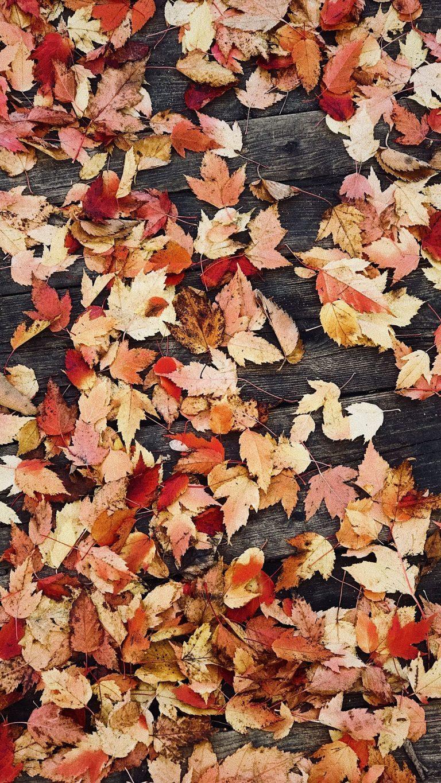 Autumn Phone Wallpaper 095 768x1365
