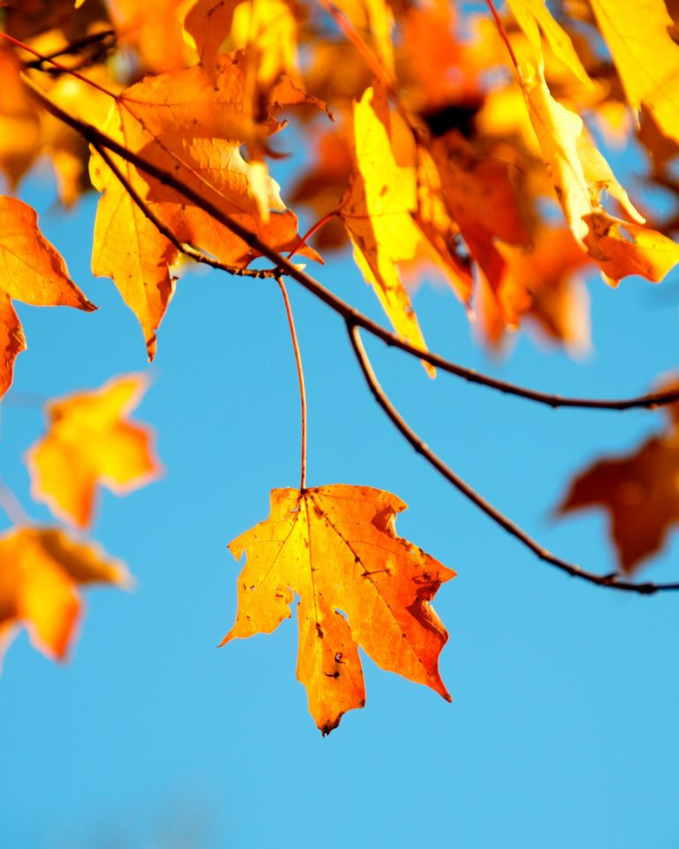 Autumn Phone Wallpaper 100 768x960