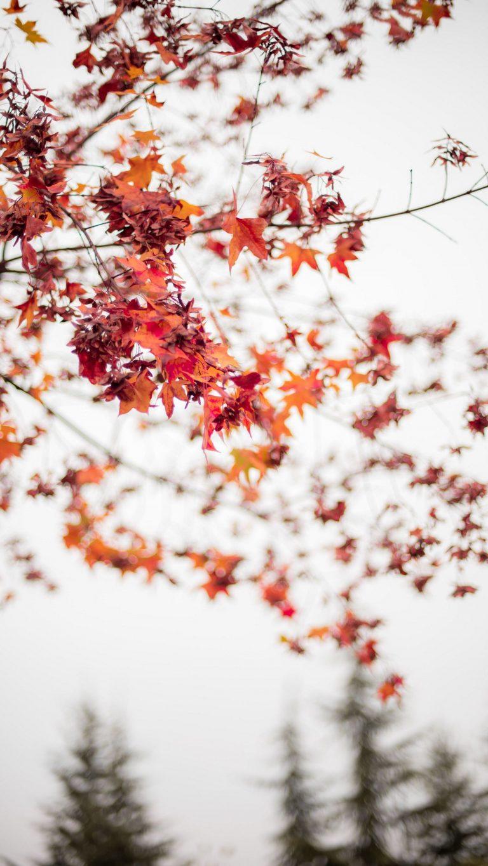 Autumn Phone Wallpaper 101 768x1365
