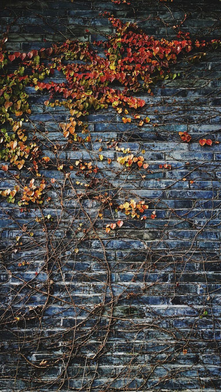 Autumn Phone Wallpaper 106 768x1365