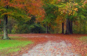 Autumn Road Trees Wallpaper 1200x900 340x220