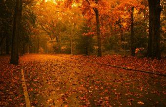 Autumn Road Wallpaper 1600x1200 340x220