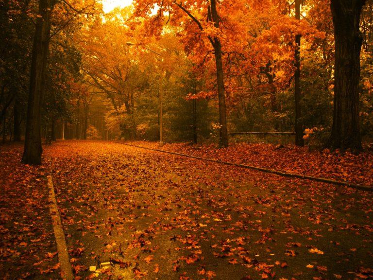 Autumn Road Wallpaper 1600x1200 768x576