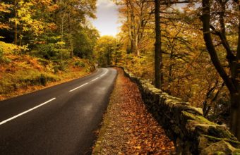 Autumn Road Wallpaper 2560x1600 340x220