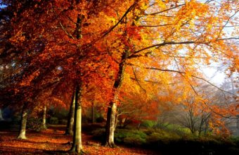 Autumn Trees In Morning Wallpaper 1920x1200 340x220
