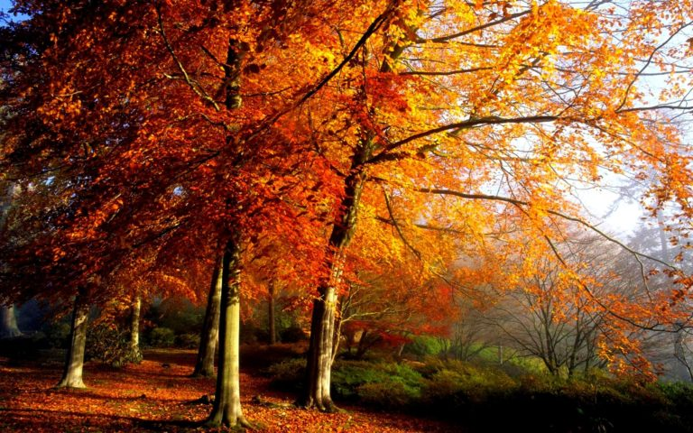 Autumn Trees In Morning Wallpaper 1920x1200 768x480