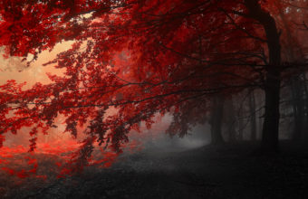 Autumn Trees Road Fog Landscape Wallpaper 3840x2160 340x220