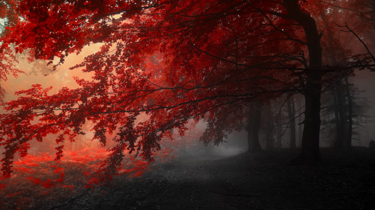 Autumn Trees Road Fog Landscape Wallpaper 3840x2160 768x432