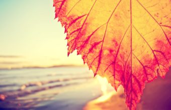 Autumnal Leaf Covering The Beach Wallpaper 2560x1600 340x220