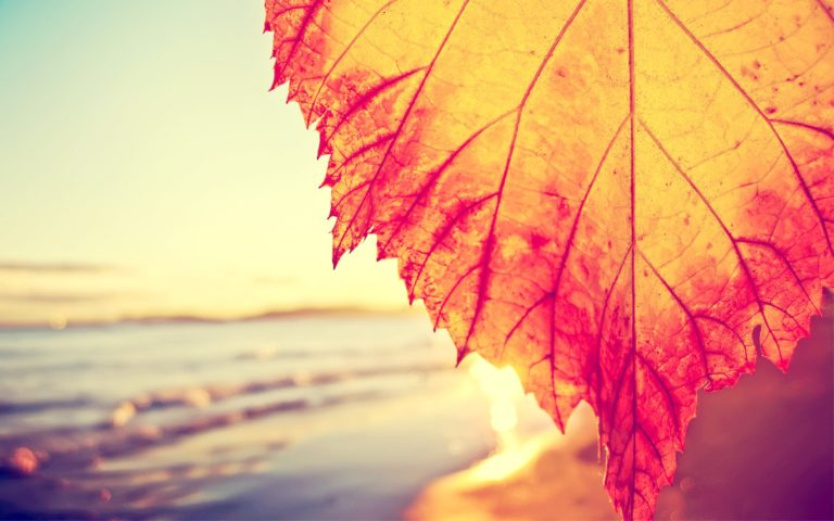 Autumnal Leaf Covering The Beach Wallpaper 2560x1600 768x480