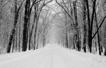 Avenue Trees Winter Wallpaper 1440x900 340x220