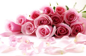 Awesome Roses Wallpaper 2560x1600 340x220