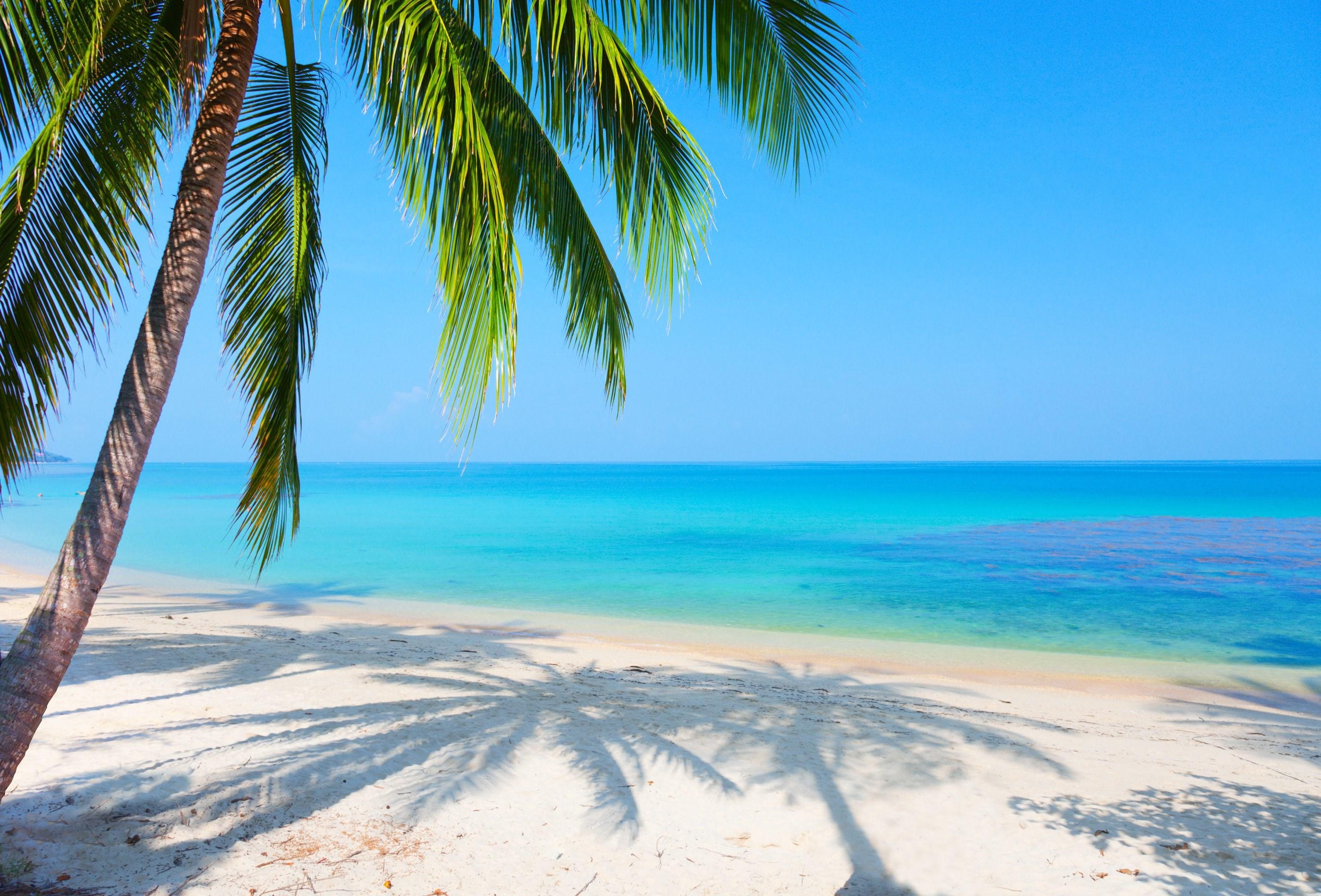 Beach Reflection Landscape Palm Tree Wallpaper 2946x2000