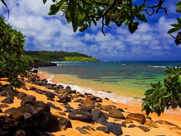 Beach Shade Hawaii Wallpaper 1600x1200 768x576