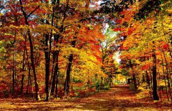 Beautiful Fall Folliage Vote Wallpaper 2220x1480 340x220