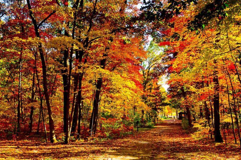 Beautiful Fall Folliage Vote Wallpaper 2220x1480 768x512