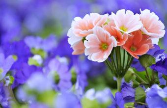 Beautiful Flowers 4K Wallpaper 3840x2160 340x220