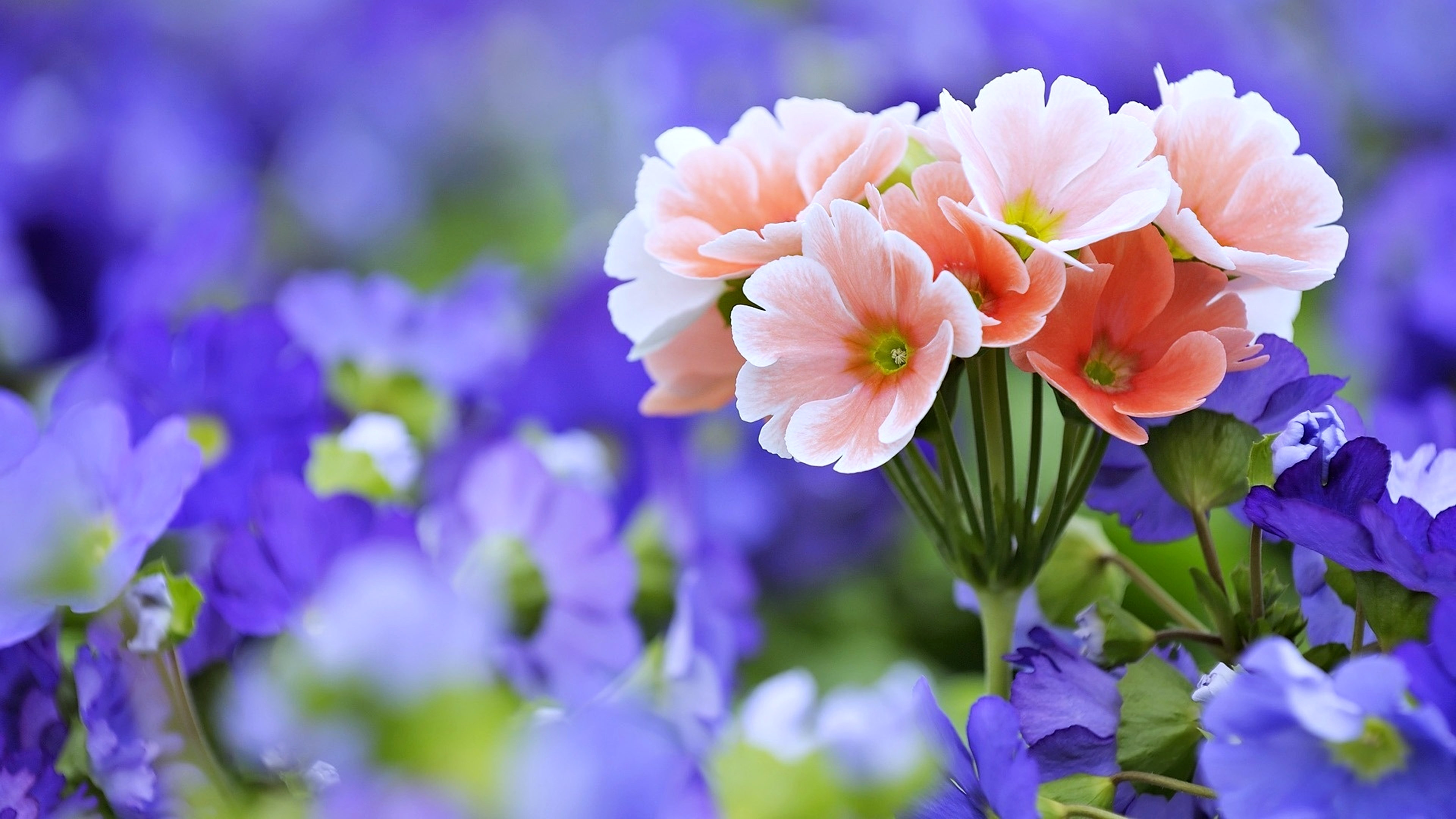 Beautiful Flowers 4k Wallpaper 3840x2160