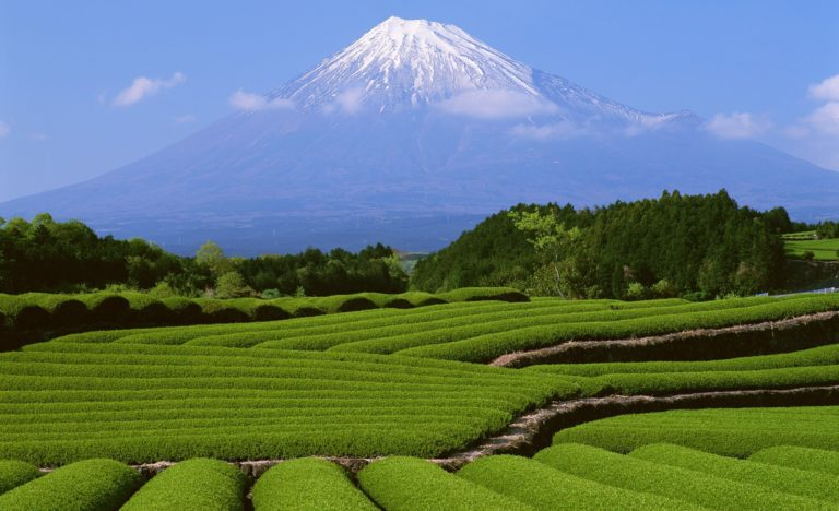 Beautiful Landscape View Wallpaper 2560x1560 768x468