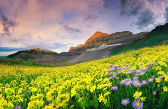Beautiful Mountain Valley Of Flowers Wallpaper 1920x1200 340x220