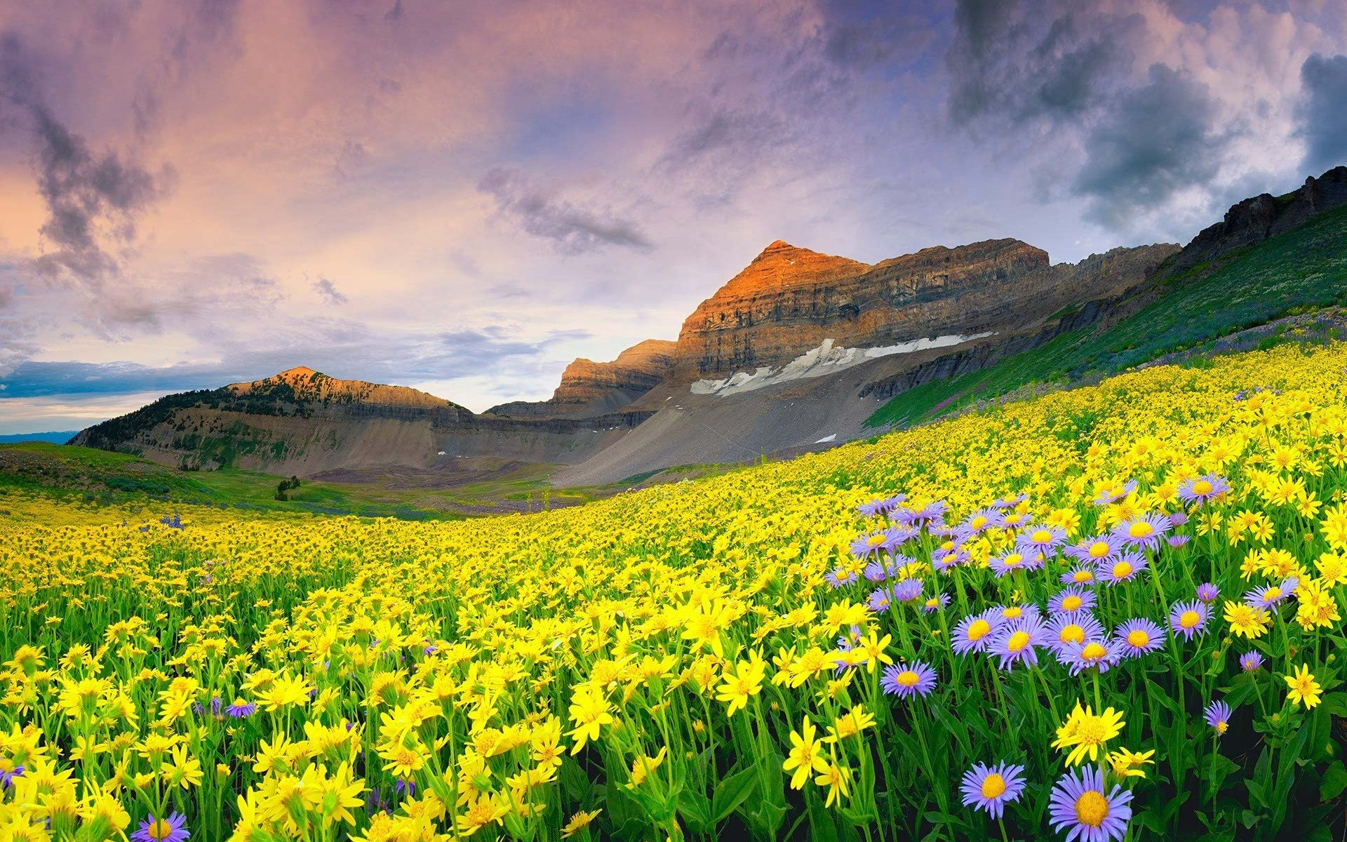 Beautiful Mountain Valley Of Flowers Wallpaper 1920x1200
