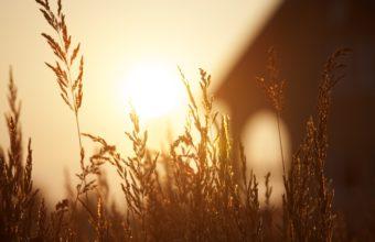 Beautiful Sunset Field Bokeh Grass Wallpaper 2560x1600 340x220