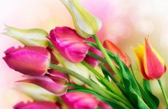 Beautiful Tulip Set Wallpaper 1920x1200 340x220