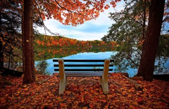 Bench Autumn River Wallpaper 2048x1351 340x220