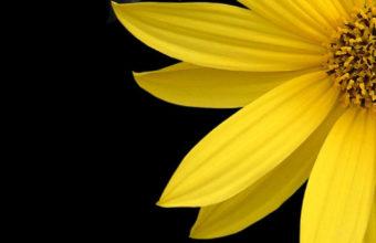 Black Flowers iPhone 7 Wallpaper 750x1334 340x220