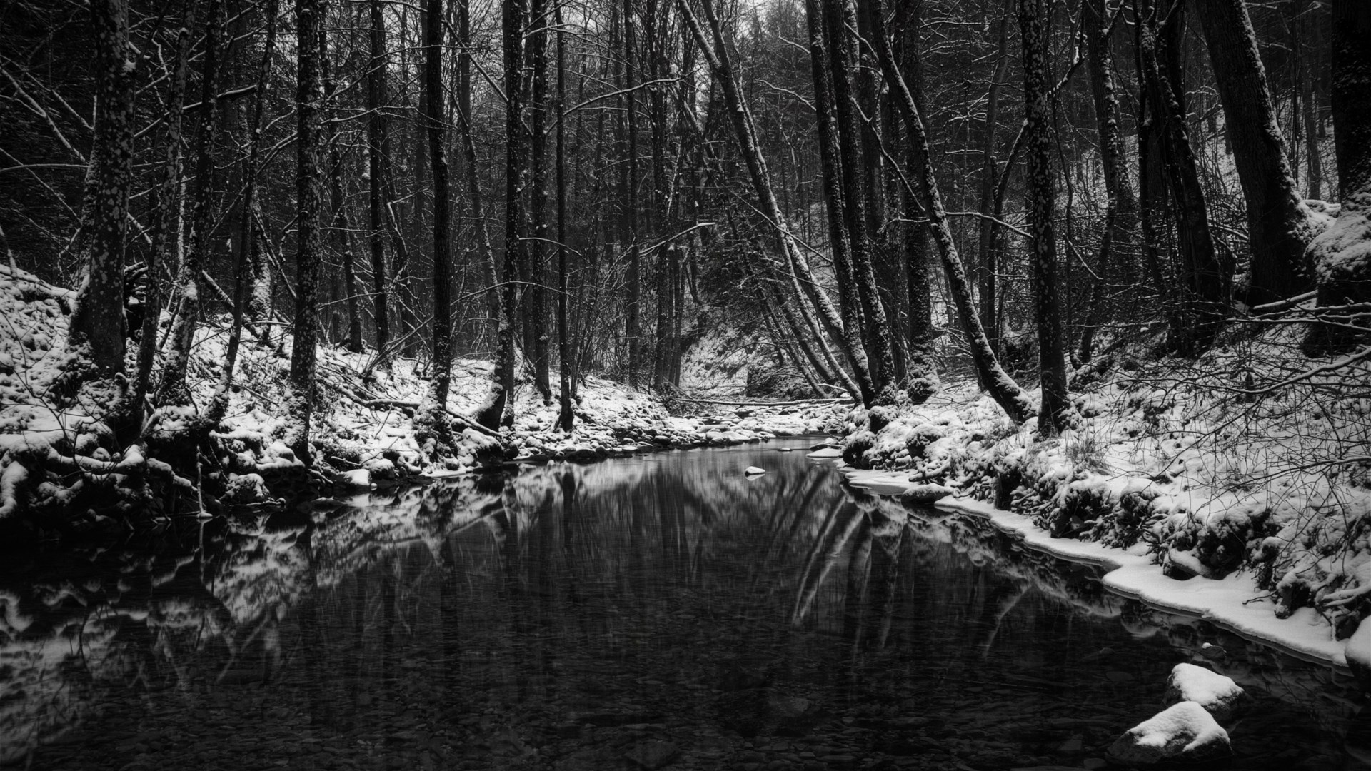 Black White Monochrome Nature Wallpaper 1920x1080